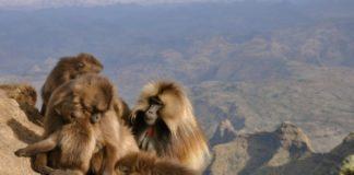 Destination Wild : les merveilles de l'Afrique