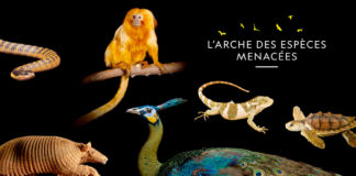National-Geographic-Wild-L'Arche-des-espèces-menacées