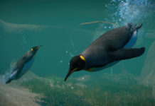 Planet-Zoo_Aquatic_Paid_Screenshots_Penguin_01_3840x2160