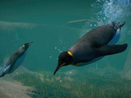 Planet-Zoo_Aquatic_Paid_Screenshots_Penguin_01_3840x2160