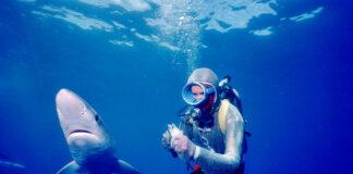 Face aux requins